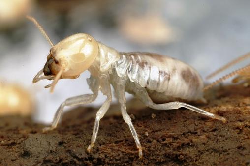 Termite Extermination Near Me